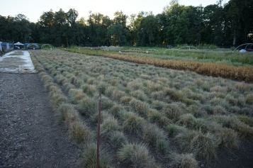 Part of the native plant nursery at Buford Park